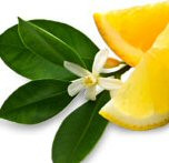 Green Tea Citrus PhytoScented Botanical Extract