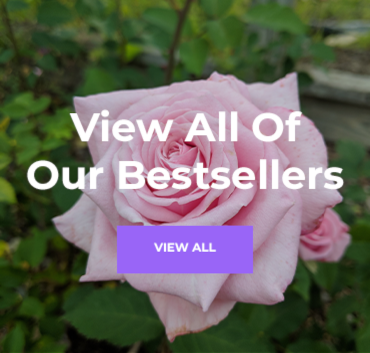 View all of our bestsellers